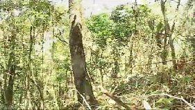 Capturadas na floresta e fodidas a força